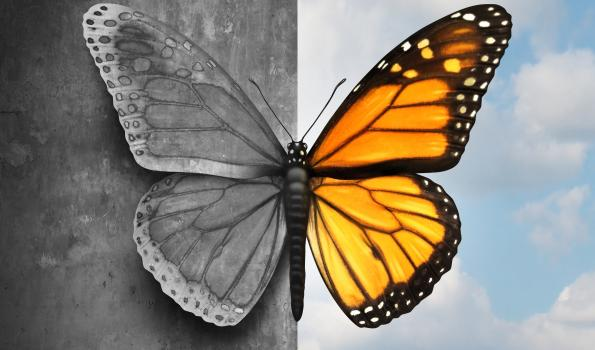 Butterfly transition from black and white to color